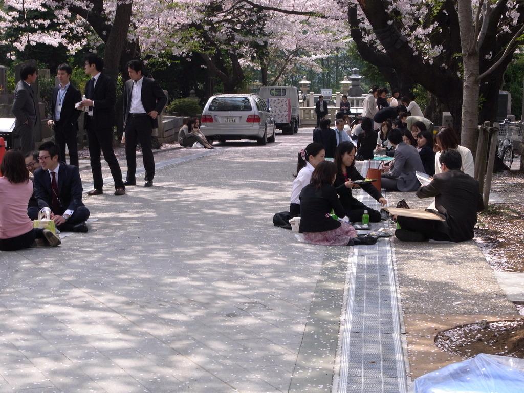 青山霊園 花見でランチ