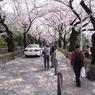 RICOH CX1で撮影した人物(青山霊園 桜のトンネル)の写真(画像)