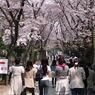 RICOH CX1で撮影した人物(青山霊園 桜吹雪)の写真(画像)