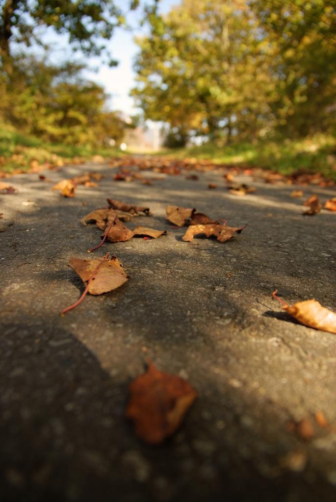 秋の気配…
