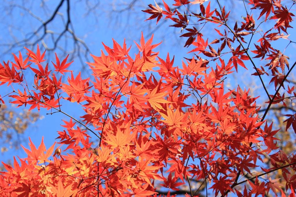 紅葉〜紅〜