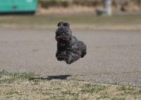 CANON Canon EOS 40Dで撮影した動物(空中浮遊!?)の写真(画像)
