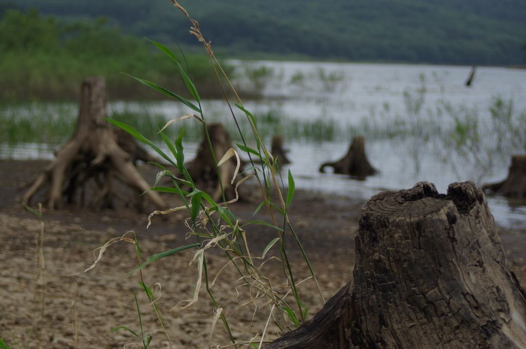 秋の寂しげな湖畔