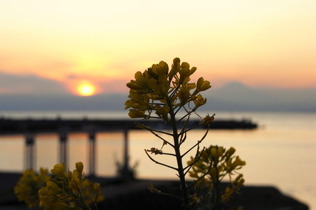 夕日と菜の花