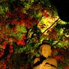 長谷寺の風景
