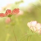 CANON Canon EOS Kiss X2で撮影した植物(対照的な二人♪)の写真(画像)