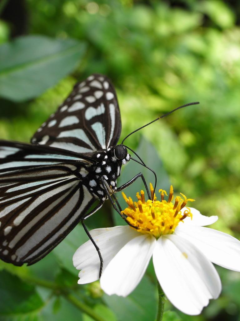 蝶になりたい^^♪