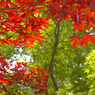 PENTAX PENTAX K100Dで撮影した植物(コントラスト)の写真(画像)