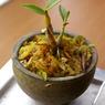PENTAX PENTAX K100Dで撮影した植物(bonsai)の写真(画像)