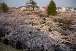 北国の春1