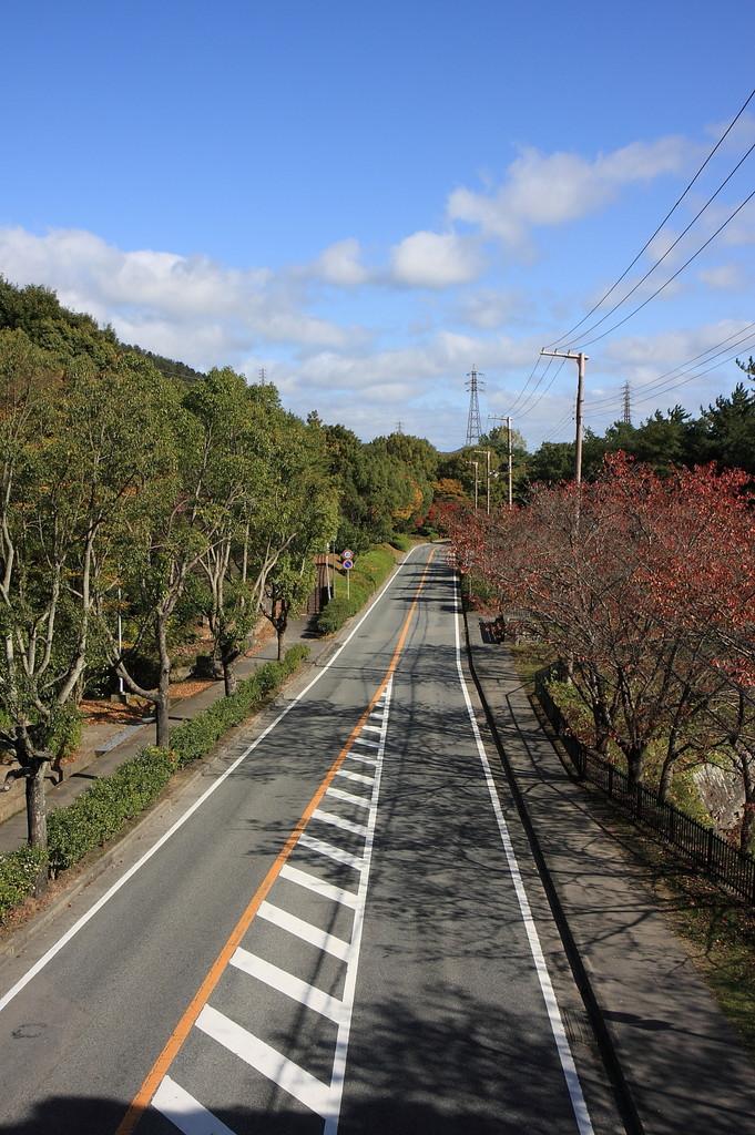 秋へと続く道
