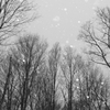 静かに雪が舞う