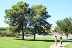 二本の木と姉妹