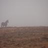 CANON Canon EOS Kiss X2で撮影した(朝霧の中に)の写真(画像)