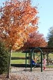 公園にも秋
