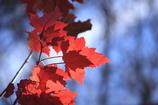 残り少ない秋色