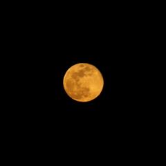 オレンジ色したブルームーン