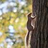 木登り得意