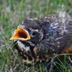 CANON Canon EOS Kiss X2で撮影した動物(食べ物チョウダイ)の写真(画像)