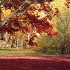 紅と黄色の絨毯