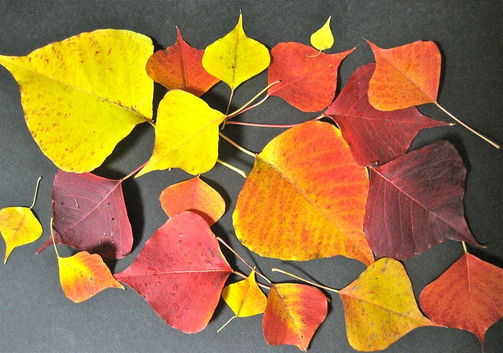 色いろ紅葉