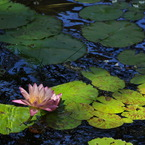 NIKON NIKON D5000で撮影した植物(Silence)の写真(画像)