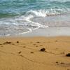 波の忘れ物