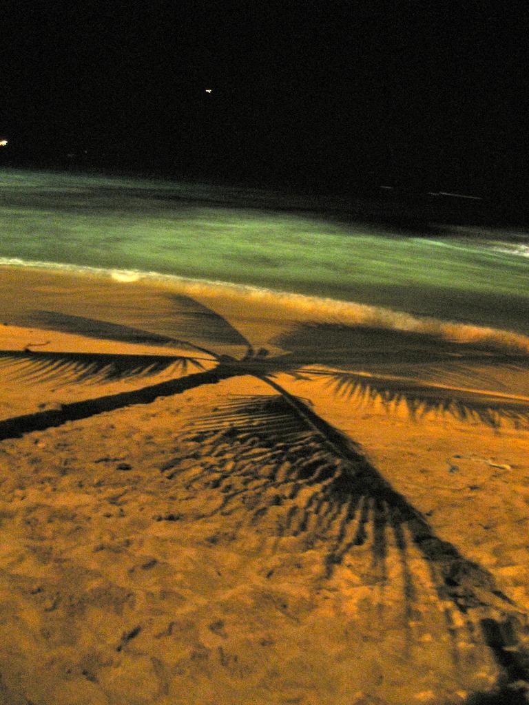 波と浜辺と椰子の影