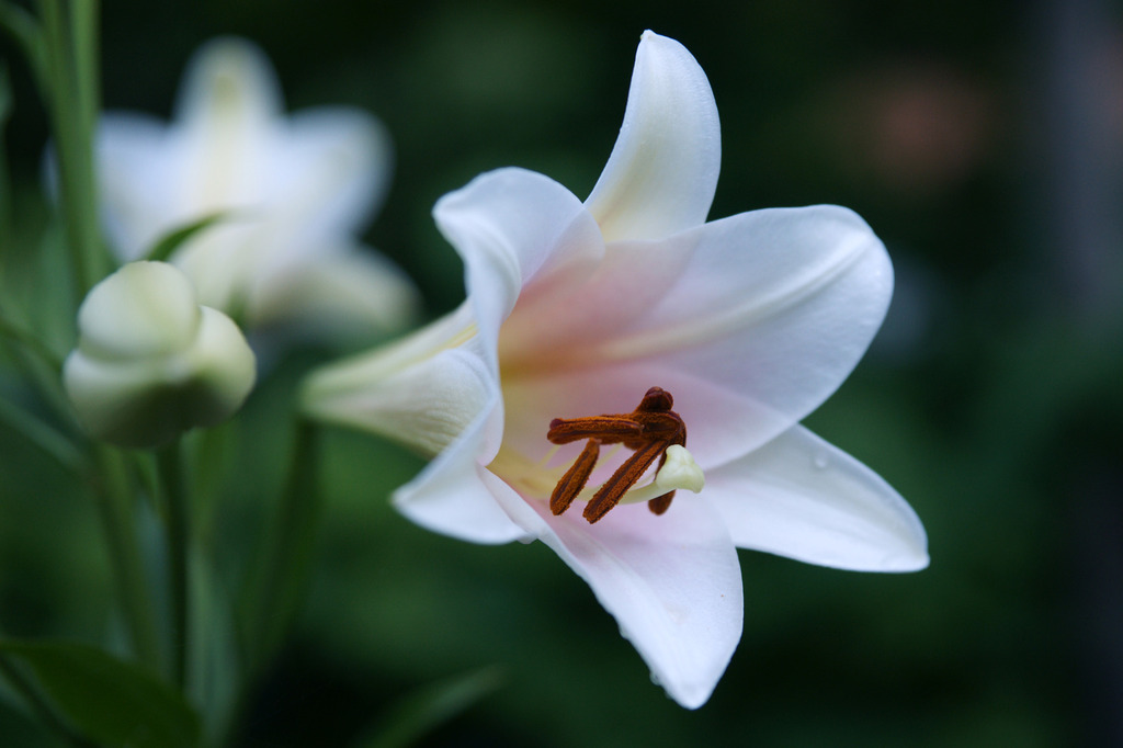モデルさんと一緒に写った花