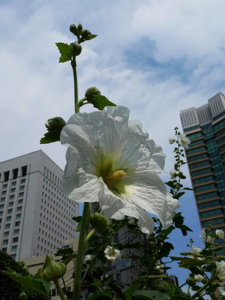 都会に咲く白い花