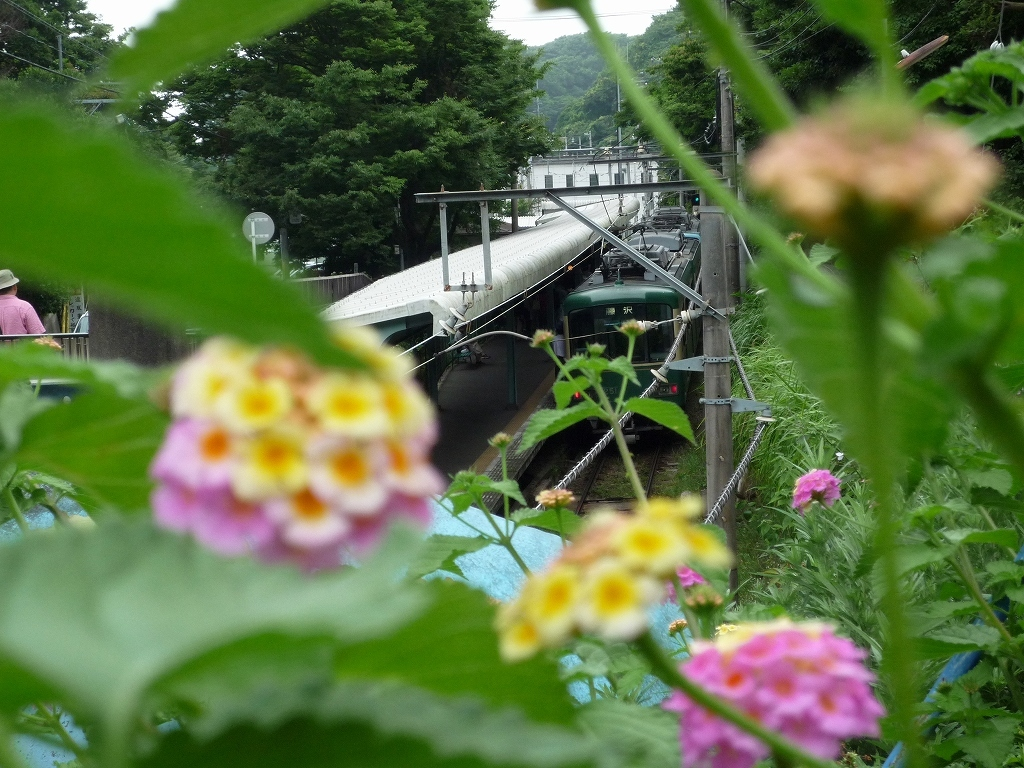 紫陽花と江ノ電