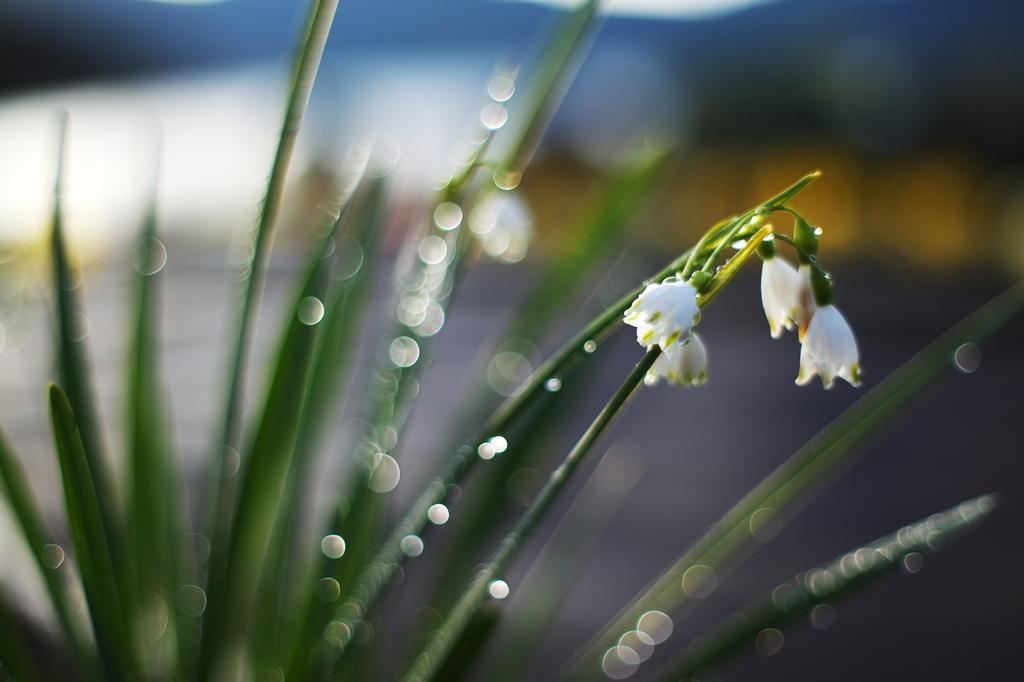 雨上がりの朝(習作その3)