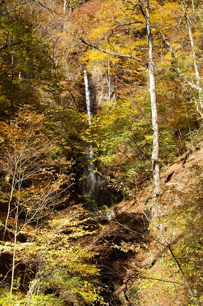 白糸の滝(奥多摩)