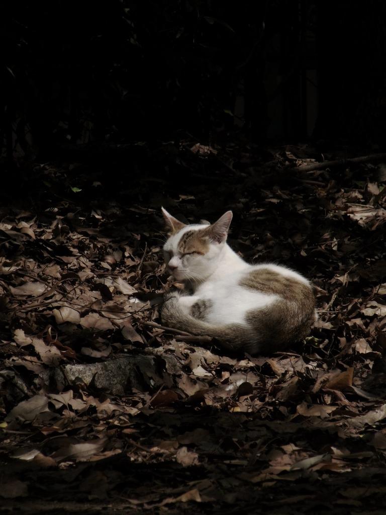 木洩れ日に微睡む