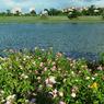 RICOH RICOH GX200で撮影した風景(R1124270)の写真(画像)