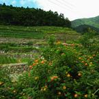 RICOH RICOH GX200で撮影した風景(R1124574)の写真(画像)