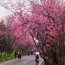 RICOH RICOH GX200で撮影した(櫻花樹下)の写真(画像)