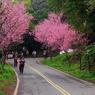 RICOH RICOH GX200で撮影した(台北的山櫻花)の写真(画像)