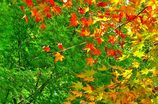 秋が空から降ってくる