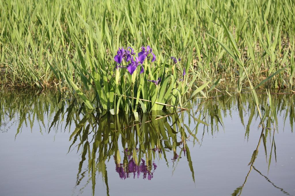 小堤西池にて