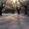 桜の光のある道で