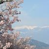高遠の桜と中央アルプス