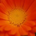NIKON NIKON D60で撮影した植物(接写03)の写真(画像)