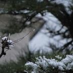 NIKON NIKON D60で撮影した風景(snow01)の写真(画像)