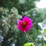 NIKON NIKON D60で撮影した植物(花の蜜にさそわれて)の写真(画像)