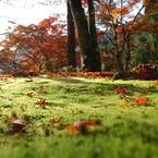 NIKON NIKON D60で撮影した風景(10cmの世界)の写真(画像)