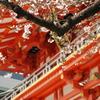 赤の建物と桜がいい感じ