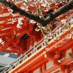 NIKON NIKON D60で撮影した風景(赤の建物と桜がいい感じ)の写真(画像)