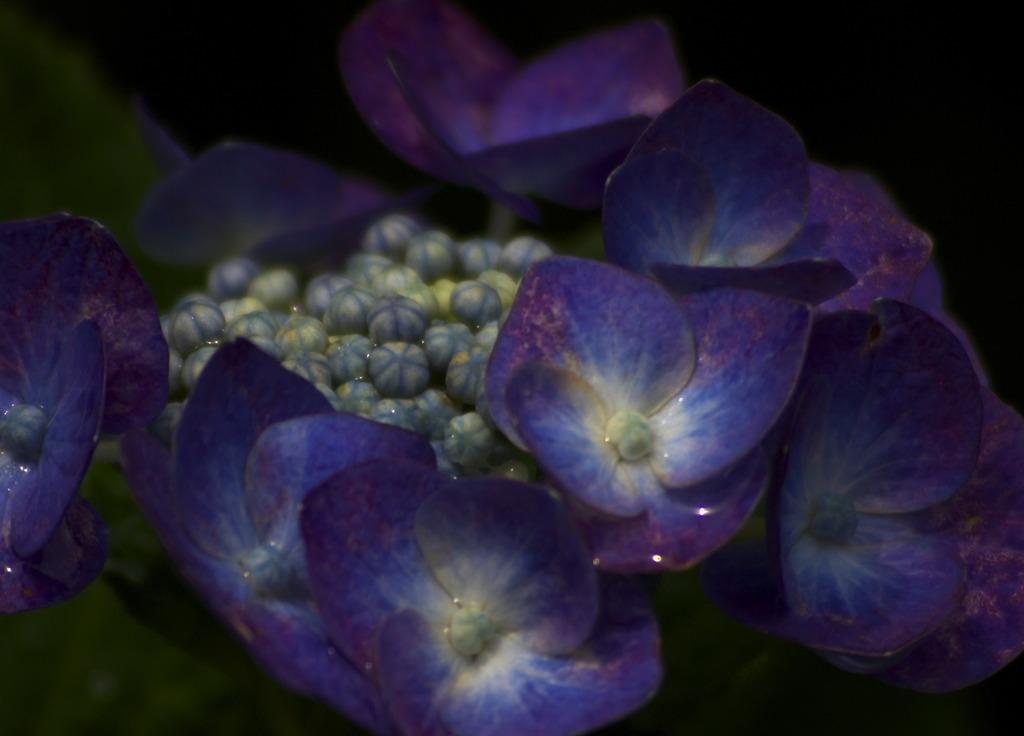 2公園の花