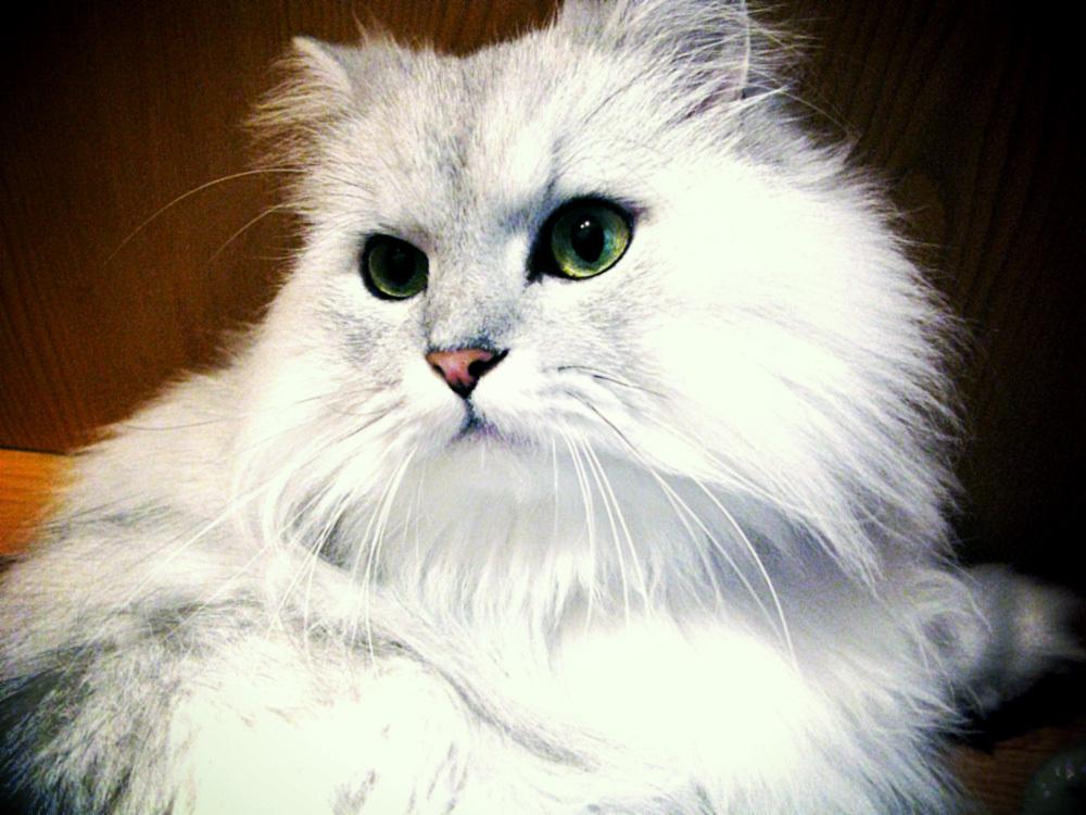 飼い猫のペイジ